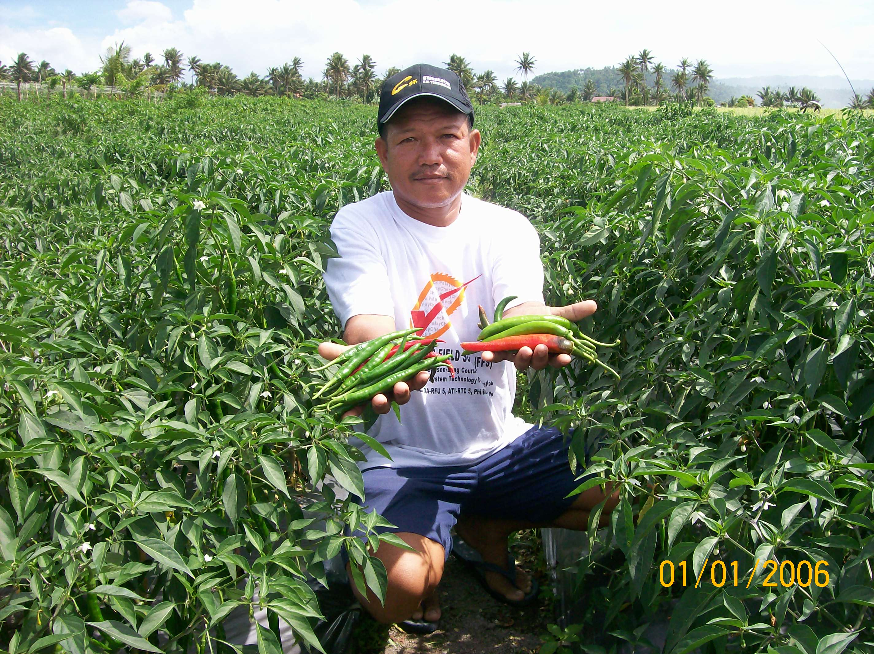 filipino farmers Riceup for filipino farmers is a sustainable social enterprise promoting  responsible and equitabl.