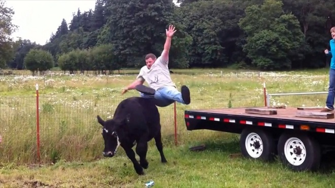fail-army_cow-riding-fail